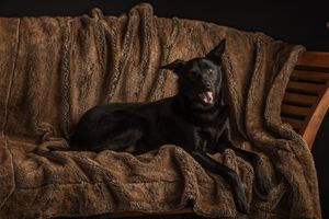 Relaxed Pet Portraits