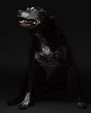 Old Dogs Pet Portrait