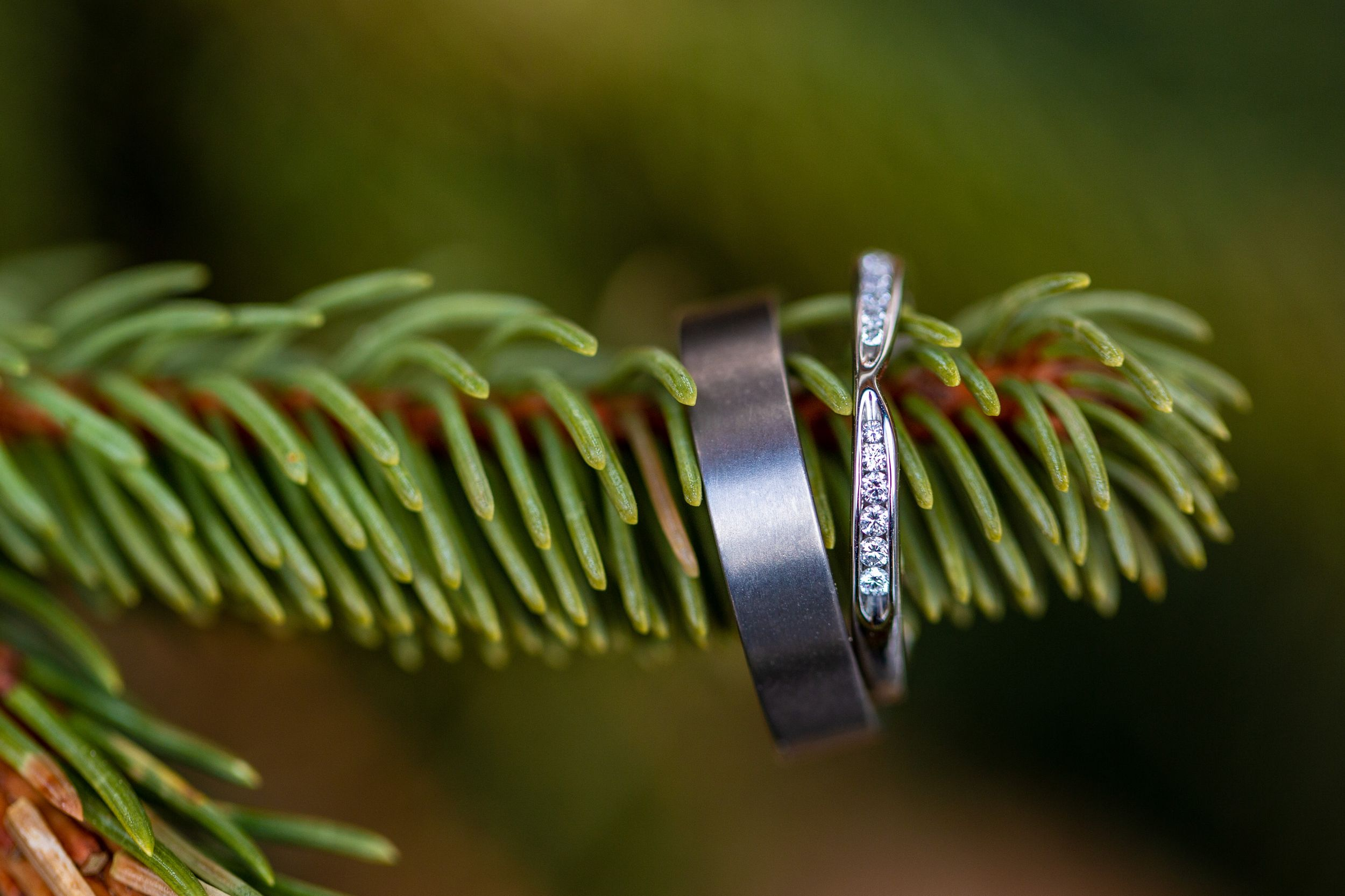 Wedding rings on Christmas tree branch