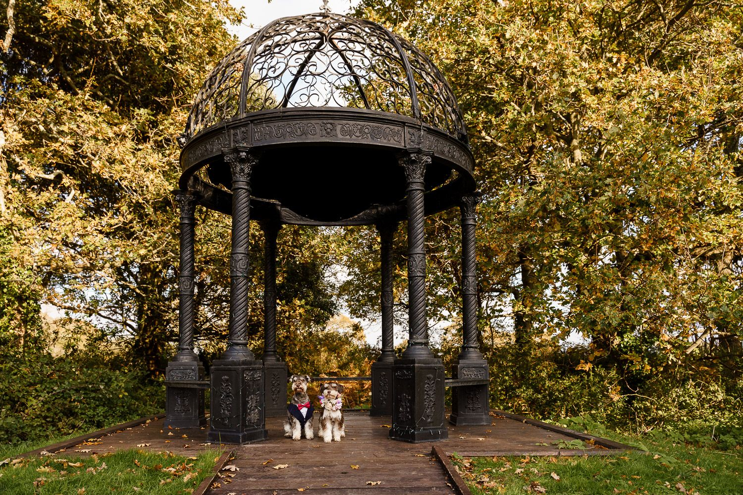 Two schnauzers in a tuxedo and flower collar in an outdoor wedding pergola. Top 10 dog-friendly wedding tips.
