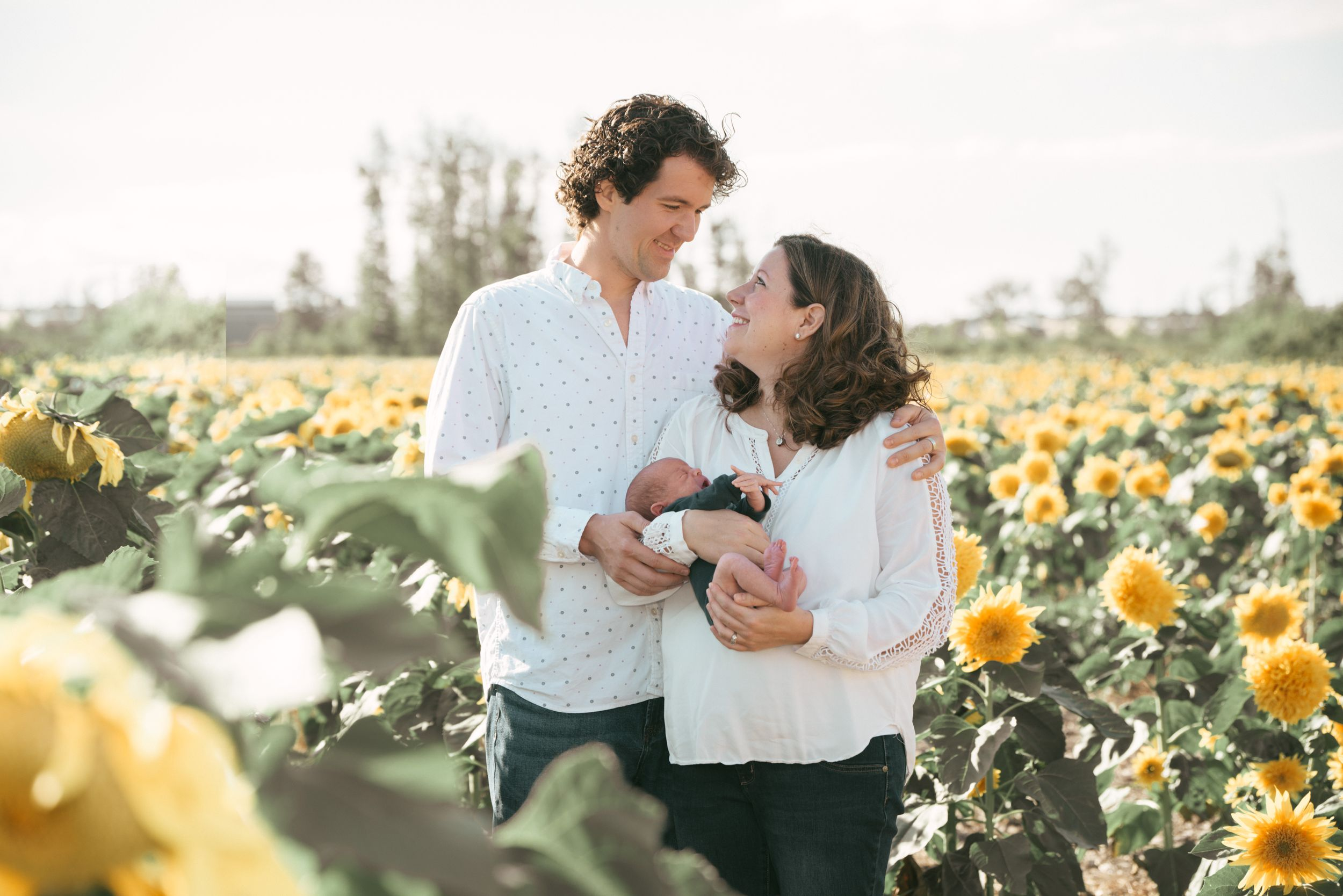 family with newborn in sunflower field, Maria's Field of Hope, Avon Lake, Ohio