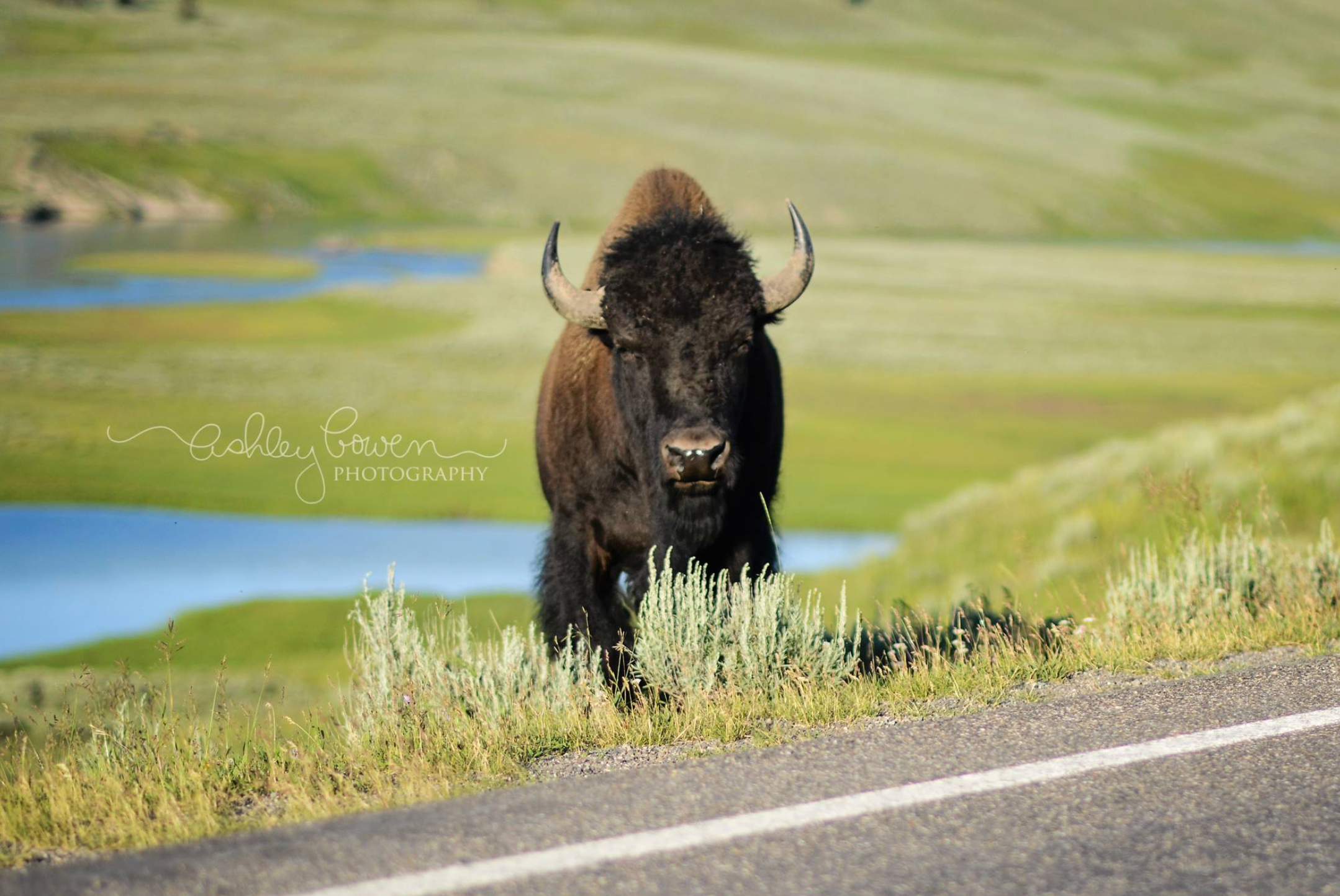 Buffalo in Custer State Park, South Dakota!