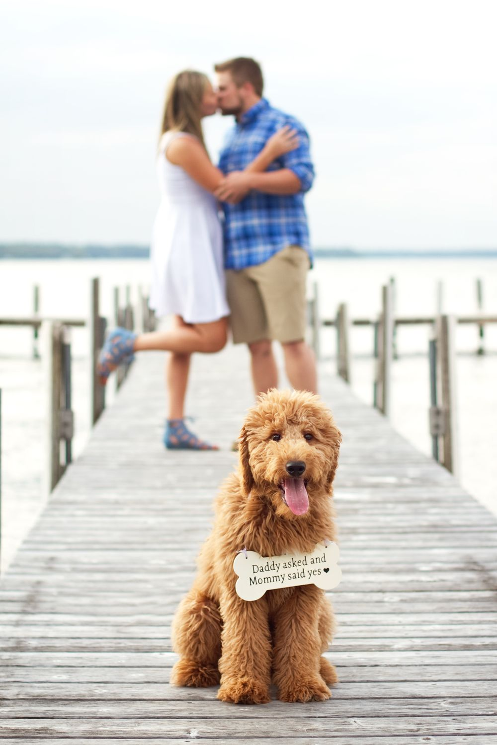 Dock engagement, dog