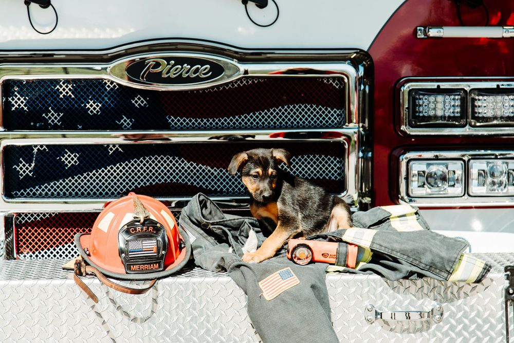 rifle animal shelter, dog, fire department