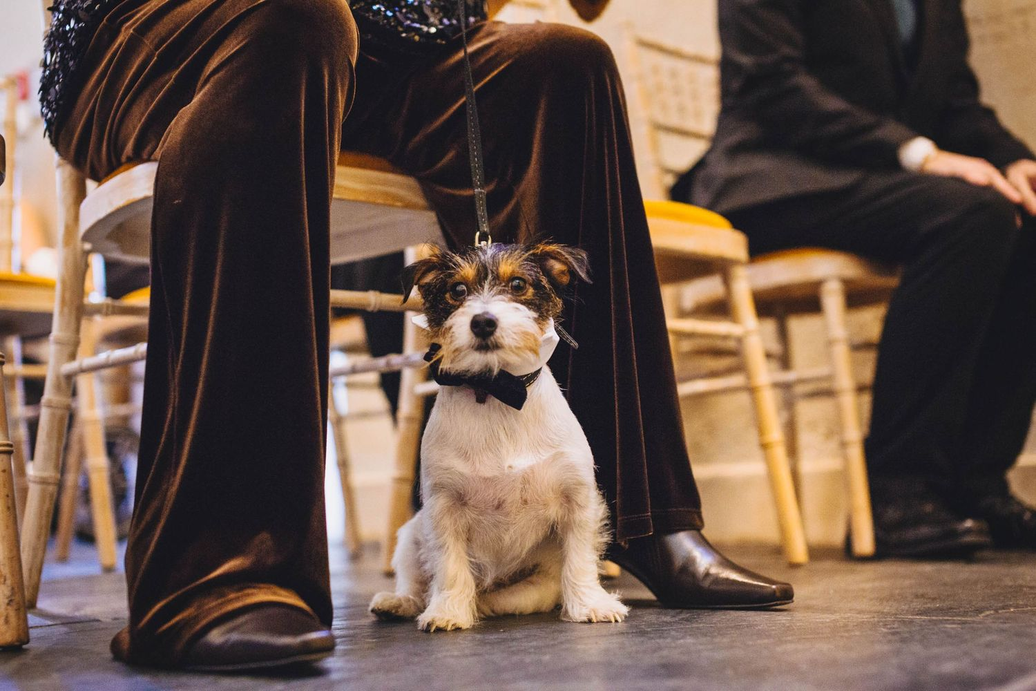 Jack Russell wearing a bow tie at a barn wedding. Top 10 dog-friendly wedding tips.
