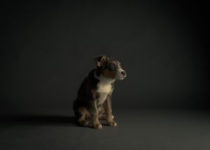 Puppies and Kitten Pet Portraits