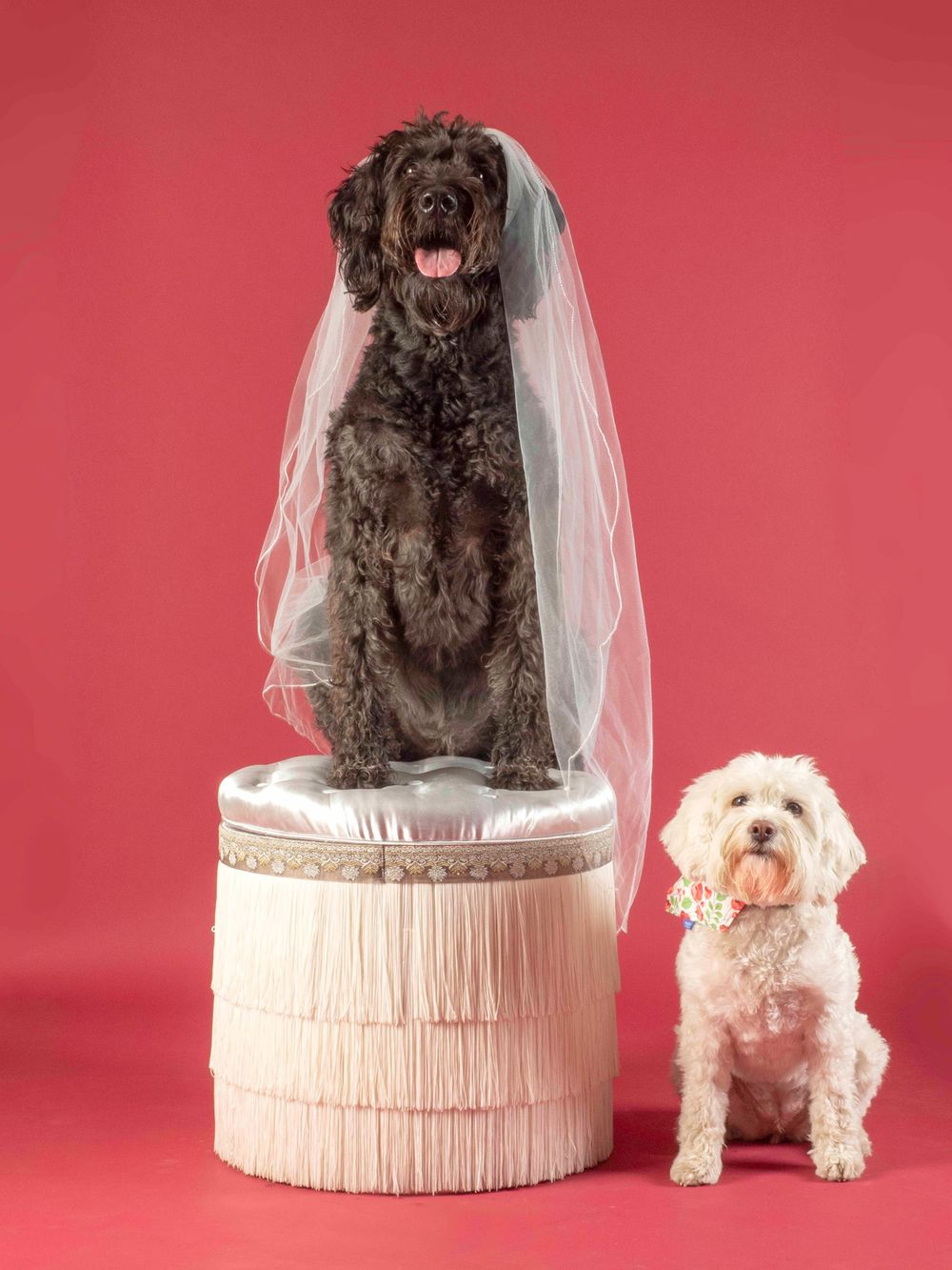 'I do, I do, I do, I do, I do' staring Lois the labradoodle and Flora the rescue dog