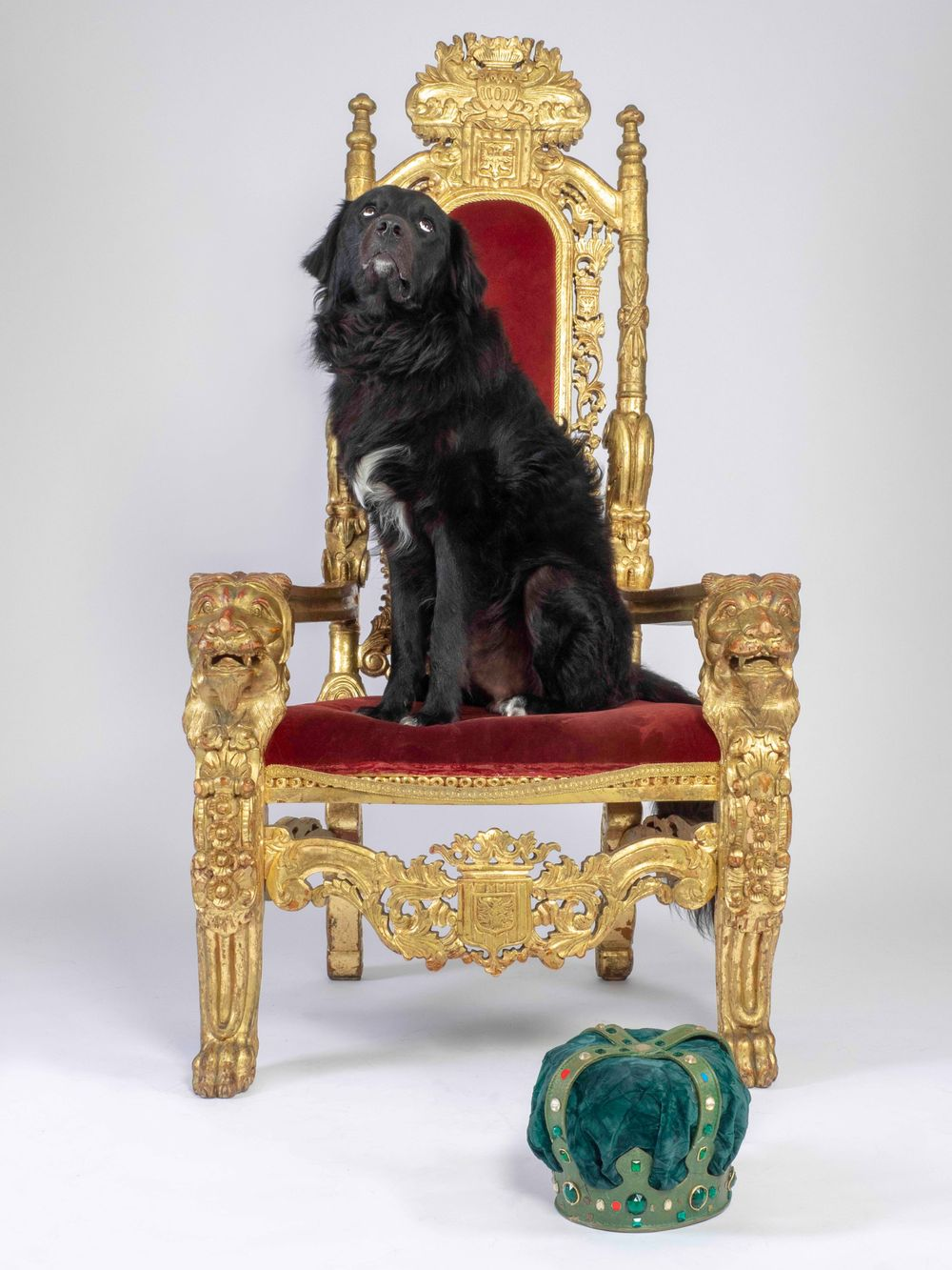 Rescue dog Bernie in 'The King has lost his Crown'