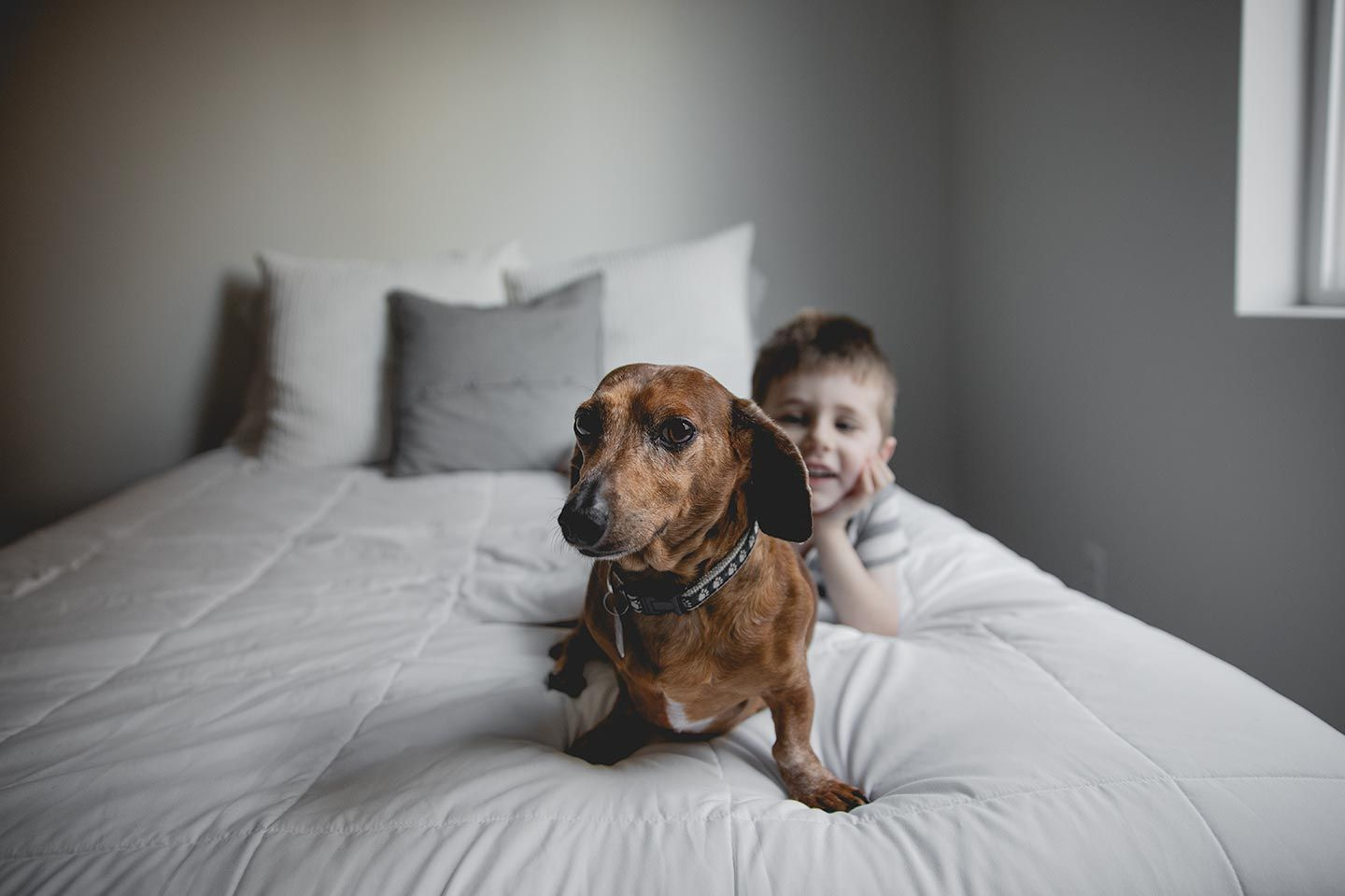 dachshund sitting on bed with little boy