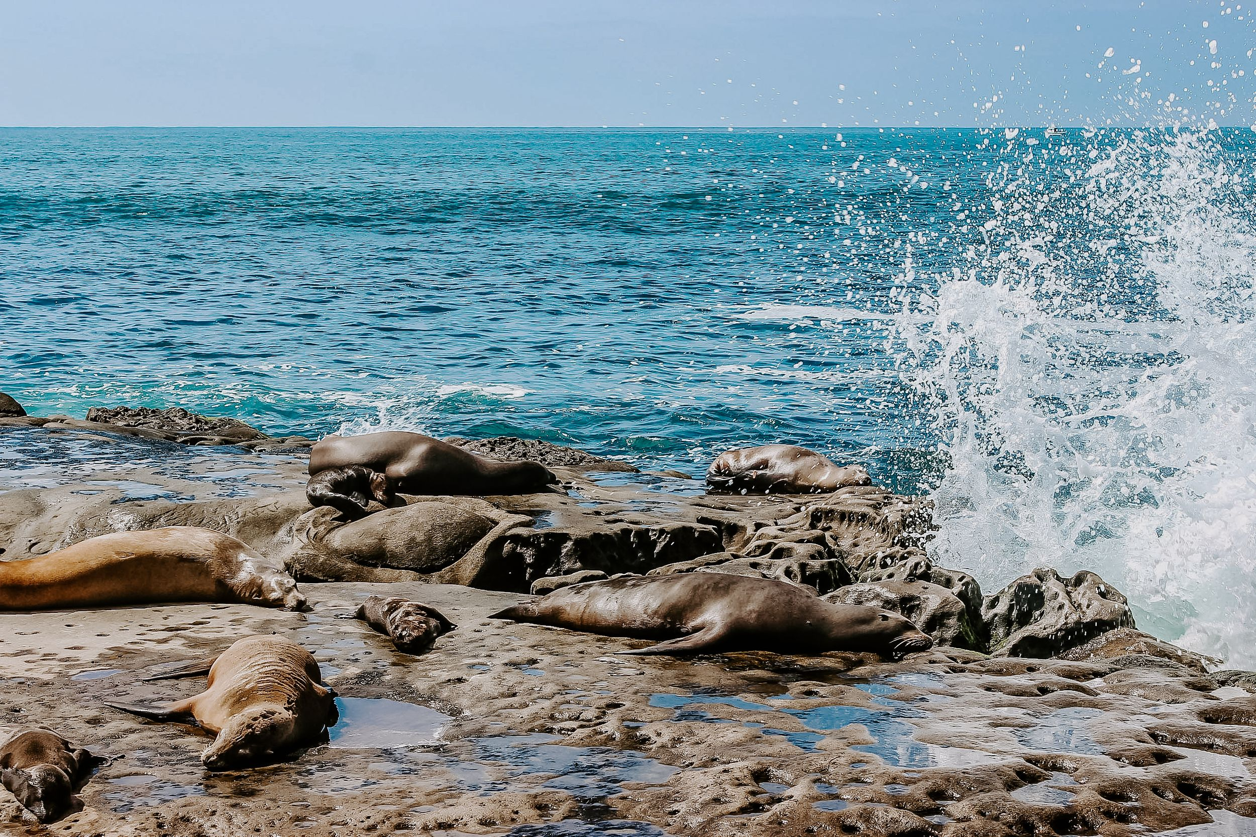 seals sitting on rocks while water splashes up near them in San Diego