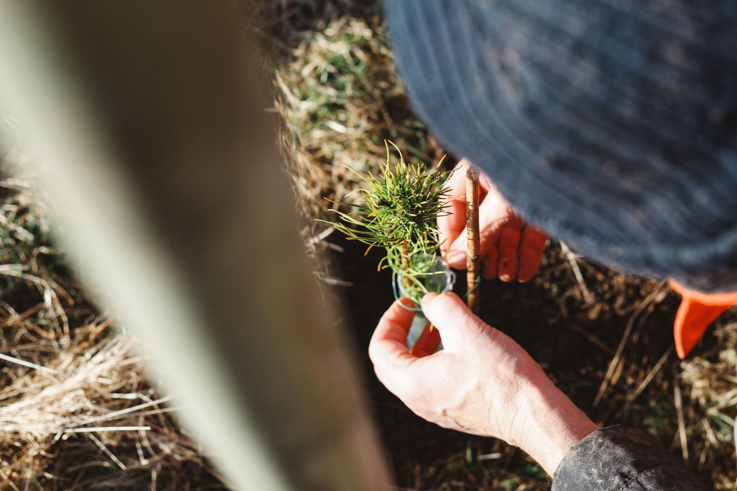 Tree planting Scotland as part of a sustainable business