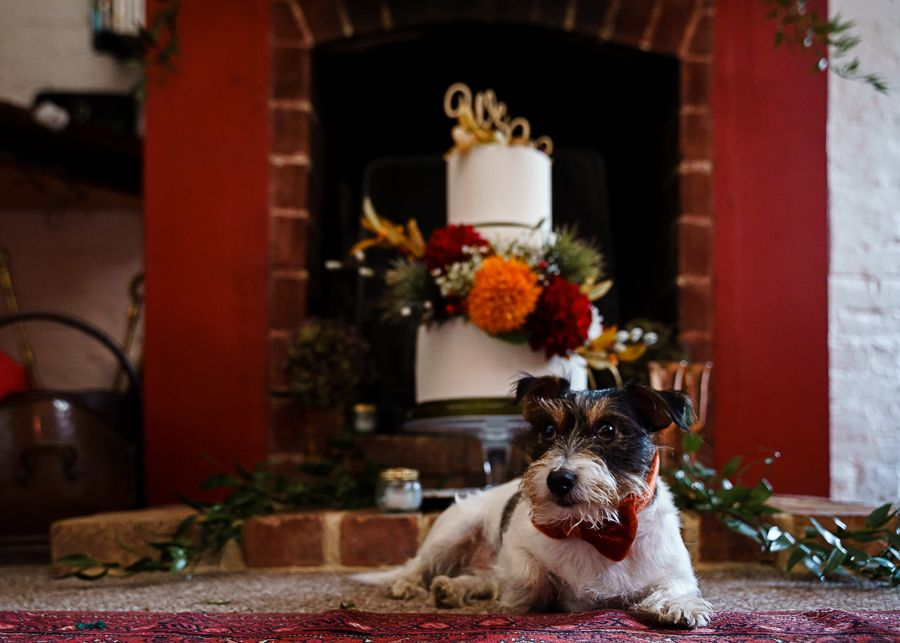 Small dog in a bow tie lies on a rug in front of an autumnal wedding cake. Top 10 dog-friendly wedding tips.