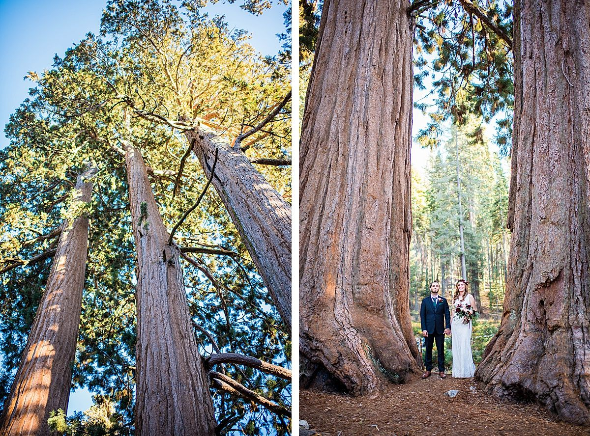 Sequoia National Park Central Valley California Three Rivers wedding