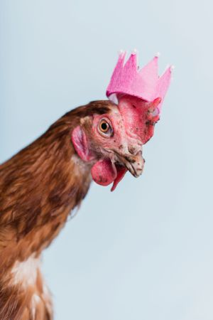 chicken wearing a crown