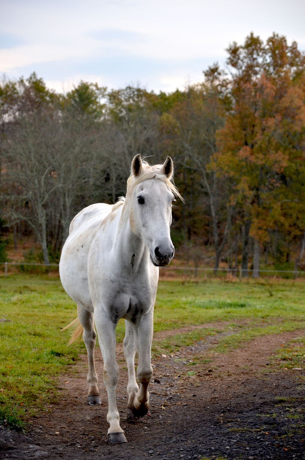White Horse Photography by Charity Beth Long